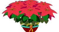 The holiday season is a great time to let your friends and family know that you are thinking of them.  Poinsettias will brighten their homes and yours too, and are […]